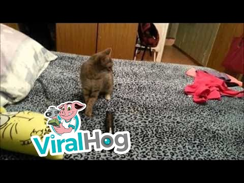 左邊這隻貓咪打完噴嚏後,紅色圈圈裡最爆笑的連鎖反應就發生了!