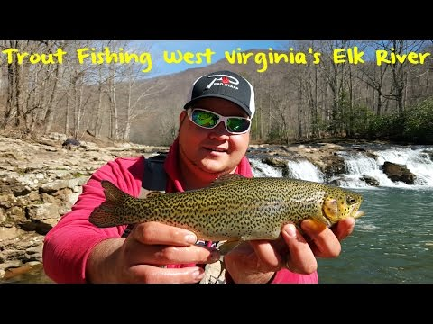 Trout fishing west virginia 39 s elk river free video and for Elk river wv trout fishing