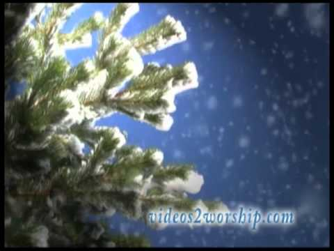 Winter Worship Background Loop: Evergreen Branches