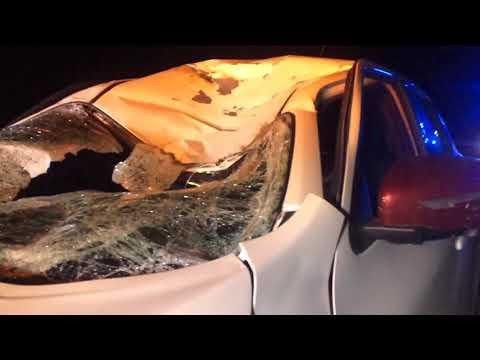 Wideo1: Nissan juke po kolizji z jeleniem na trasie Święciechowa - Gołanice