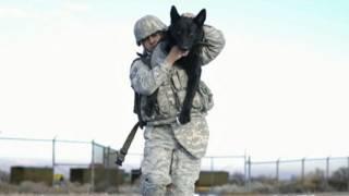 Nonton Osama Bin Laden Dead  Seals  Dog Of War Film Subtitle Indonesia Streaming Movie Download