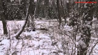 Download Lagu Villisikajahtia Virossa. Mp3
