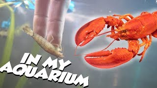 UNBOXING A LOBSTER FOR MY AQUARIUM!! by  Challenge the Wild