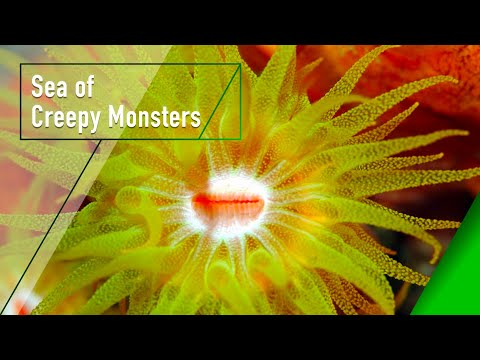 Sea of Creepy Monsters - The Secrets of Nature