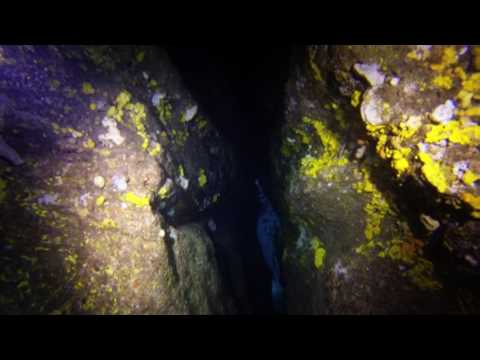 Cathedral Caves - Scuba Diving Tasmania