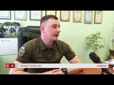 Військова прокуратура Житомирського гарнізону захистила ліс