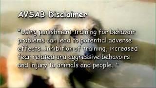 """Friendship Tails"" Episode 7:  Behavior Modification"