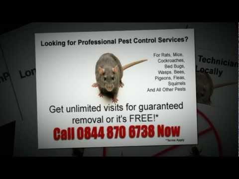Pest Control in Islington North London 0844 870 6738