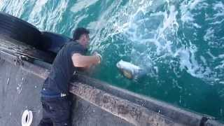 Homem PegaPeixe Enorme se Vara de Pescar