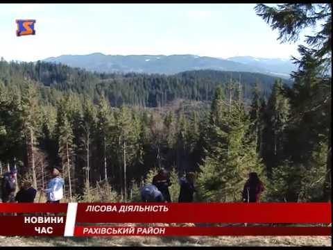 Лісова діяльність. На Закарпатті засадили 5 гектарів лісу