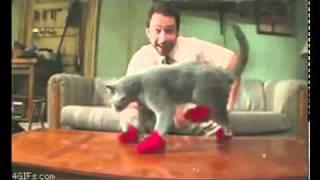 أروع وأغرب لقطات الفيديو لسنة 2013 - أطرف الحيوانات