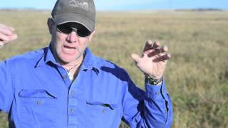 The Truth About Grazing Legumes