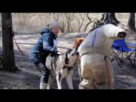 Сао Ярик и щенок проверка
