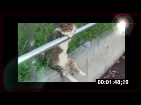 relaxed with Cat sitting (видео)
