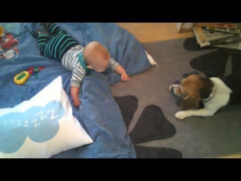 малыш и собака ловит пузыри