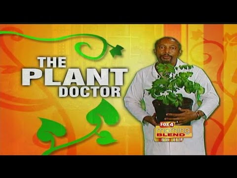 The Plant Doctor: Florida native plants