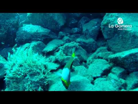 Bucear en La Gomera
