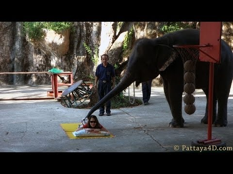 Pattaya Attractions Sriracha Tiger Zoo Full Elephant Show