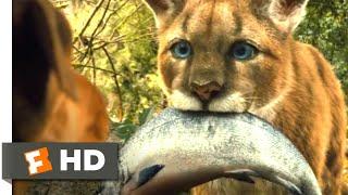 Video A Dog's Way Home (2018) - Big Kitten Scene (2/10) | Movieclips MP3, 3GP, MP4, WEBM, AVI, FLV Mei 2019