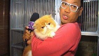 Video Puluhan Kucing Peliharaan Uya Kuya - Intens 10 Januari 2014 MP3, 3GP, MP4, WEBM, AVI, FLV Agustus 2017