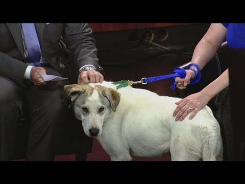 Dogs from Oklahoma up for adoption in Wisconsin