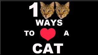100 способов проявить свою любовь к кошке