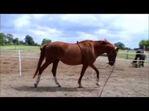 Die Longierhilfe - Ein Folterinstrument für Pferde ### by theblackpony