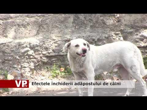 Efectele închiderii adăpostului de câini