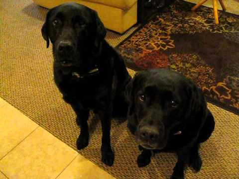 One Of These Dogs Stole A Cookie. How Mom Discovers The Guilty One Is Absolutely Hysterical!