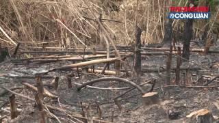 Đã nhiều lần các cơ quan báo đài nhận được những cuộc gọi cầu cứu khẩn thiết phản ánh về nạn chặt phá rừng và đốt rừng để chiếm đất canh tác tại xã Lục Sơn, huyện Lục Nam, tỉnh Bắc Giang.