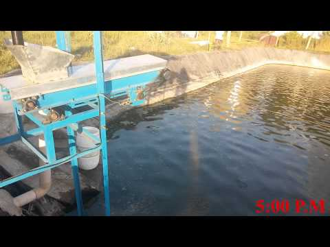 SOLAR POWERED AUTOMATIC SHRIMP FEEDING SYSTEM