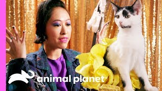 Road to the Kitty Halftime Show   Puppy Bowl XV by Animal Planet