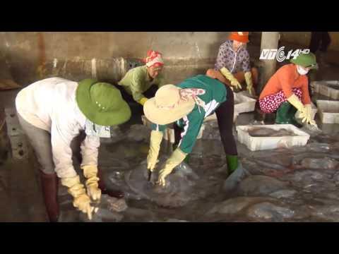 (VTC14)_Diễn Châu, Nghệ An: Nhộn nhịp mùa sứa biển