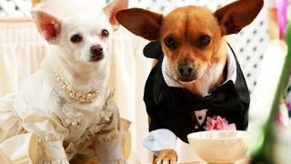 Nonton Un Chihuahua En Beverly Hills 2  Trailer Espa  Ol  Film Subtitle Indonesia Streaming Movie Download