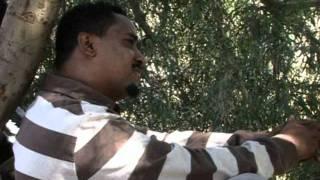 Tigrigna Music - Yared Berhe /babush/  Madi Guana