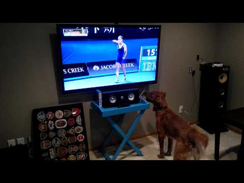 Dog loves watching tennis on Television