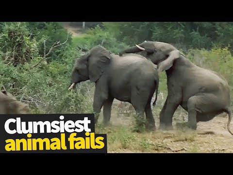 Funny videos - Funniest Clumsy Pet Fails Ever 2019  Funny Pet Videos