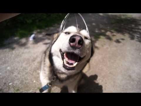 il cane che stupisce tutti!
