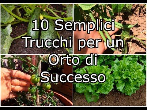 10 semplici trucchi per un orto di successo