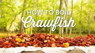 Learn how we boil crawfish down here in Louisiana!  In this video, I show you my favorite way to boil a sack of spicy crawfish.How to Boil Crawfish Recipe:sack of crawfish      36Lbs.Sides:mushrooms                  2 packsred potatoes                 1 sacklocal sausage (garlic)   1 packelephant garlic                2 headsSeasoning:sea salt                   ¼ cupliquid crab boil        16 oz.dry crab boil            4.5 lbs.The Soak:large lemons           8Ice                           1 bagProcedure:- Place crawfish in an ice chest, fill with water to rinse crawfish of any remaining mud and debris.- Drain water from ice chest, place a little ice on top of crawfish & keep the ice chest in the shade to keep them alive until ready to boil.- Fill a 120 quart pot about ¾ of the way full with water, enough to cover the amount of crawfish you are boiling.- Turn on burner, allow water to begin making it's way to boiling temperatures.- Mix in salt, dry crab boil and liquid crab boil.- Place lid on pot, allow water to come up to rolling boil.In strainer basket, add corn, potatoes, mushrooms, sausage & garlic.- Once water is boiling, lower basket of sides into the pot.- Boil sides for about 20 minutes, until potatoes are tender.- Test tenderness of potatoes with butter knife, when potato falls off, they are ready.- Remove basket from pot, set on the ground.- Pour in crawfish to the strainer basket.- Submerge basket with crawfish and sides into boiling water.- Let water come back up to rolling boil.- Once boiling, allow crawfish to cook about 6 minutes, until they float to the top of the water.- Turn off burner, keep crawfish in the pot for the soaking process.- Slice lemons in half, squeeze juice directly into the pot & throw in rind.- Stir in bag of ice into the pot.- Allow crawfish to soak in the pot for 20 minutes to absorb remaining spices.- Lift strainer above the water, prop paddle underneath to allow excess water to drain before serving.- Pour crawfish on table, cr