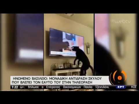 Σκύλος βλέπει τον εαυτό του στην TV και… παρανοεί! | 20/05/2020 | ΕΡΤ
