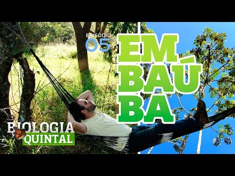 Biologia de Quintal - Embaúba