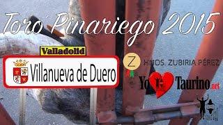 Villanueva de Duero Spain  City new picture : El Toro Pinariego 2015 encaste Santacoloma. Encierro YoTauino.net
