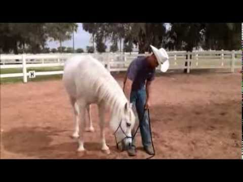 How to fix an ear shy horse.