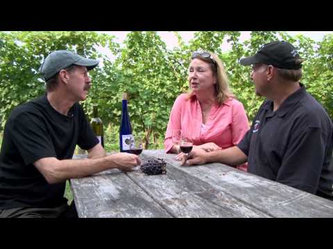 Blue Water Winery and Vineyards - Under the Radar Michigan