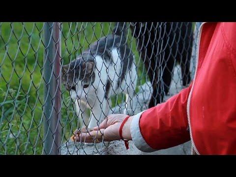 Μαδρίτη: Εθελοντές στην υπηρεσία των ζώων