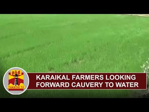 Karaikal-Farmers-looking-forward-to-Cauvery-Water-for-Cultivation-Thanthi-TV