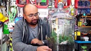 Video Terrario gigante que vive mas de 50 años! Jardín que vive en una botella NQUEH MP3, 3GP, MP4, WEBM, AVI, FLV Februari 2019