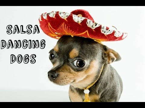 VIDEO: Salsa Dancing Dogs