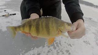 Ice Fishing Marsh Creek PA 2/1/15 Superbowl Perch